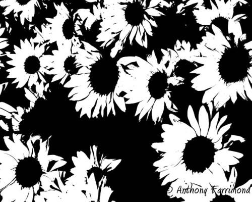 floral noise